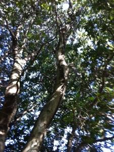 第一号ソーラー発電所のための木登りと枝切り