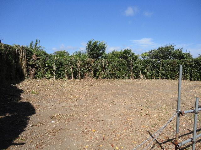 第2号ソーラー発電所伐採・除草完了